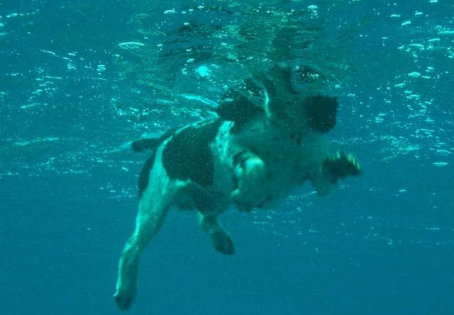Kurz potápění NAUI JUNIOR SKIN DIVER